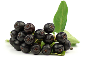 ARONIA CONCENTRATE